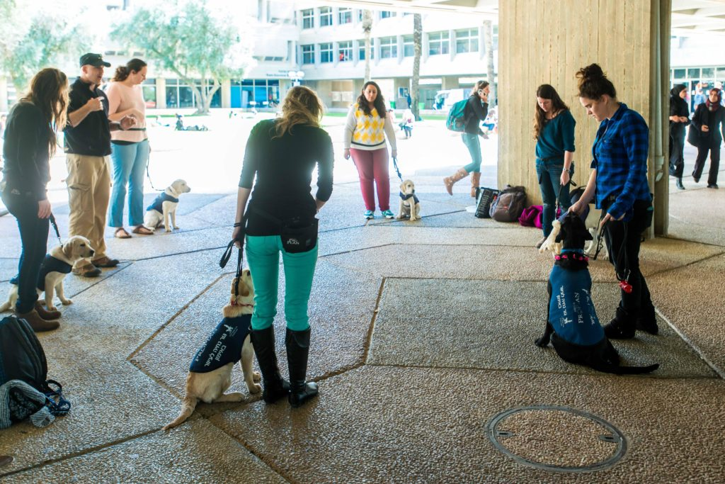 Students participating in BGU's Canine Companions program helps train Hebrew speaking guide dogs for Israel's Guide Dog Center.